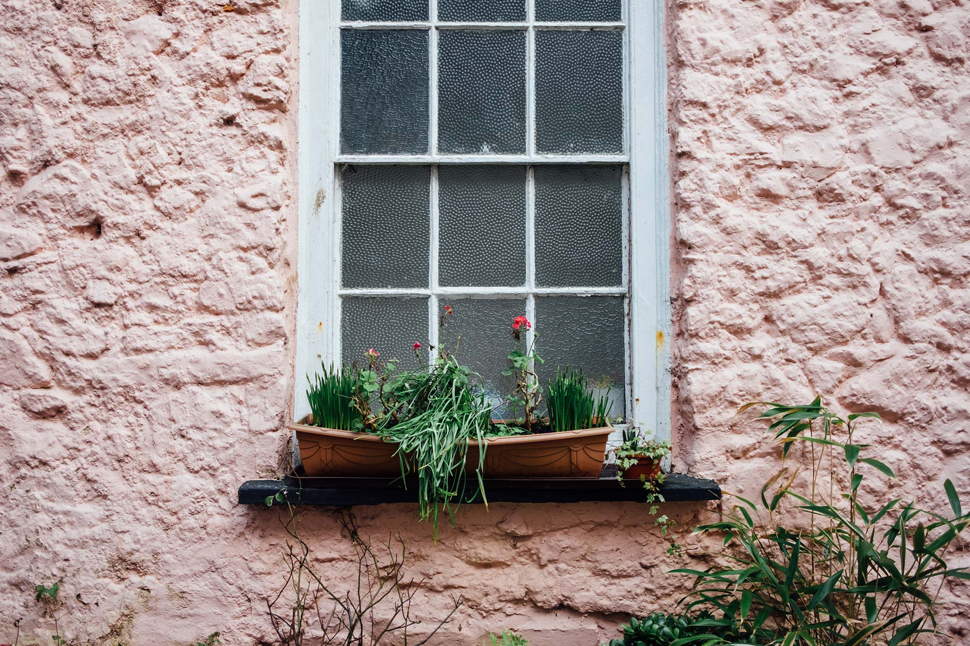Tenby Window Flowers Photography